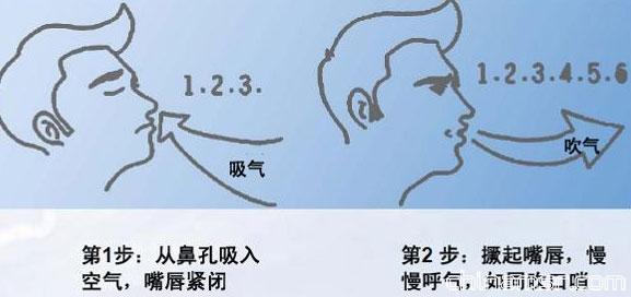 鼻腔 气管结构图