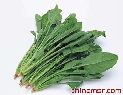 菠菜植物根茎叶结构图