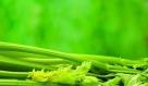 重点介绍:芹菜 芹菜是高纤维食物具有抗癌防癌的功效,它经肠内消化作用产生一种木质素或肠内脂的物质,这类物质是一种抗氧化剂,高浓度时可抑制肠内细菌产生的致癌物质。它还可以加快粪便在肠内的运转时间,减少致癌物与结肠粘膜的接触,达到预防结肠癌的目的。 推荐:西芹榨汁如果滴几滴柠檬,味道会更好。